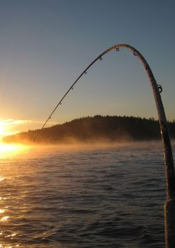 Είδη Αλιείας